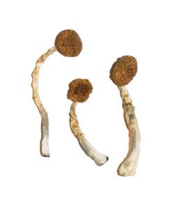 Treasure Coast Mushrooms