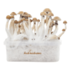 Fresh Mushrooms® Magic Mushroom Grow Kit Mexican XP