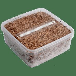 Magic Mushroom Grow Kit B+ XL by Mondo